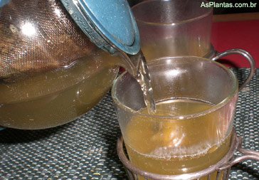 chá medicinal - Plantas Medicinais